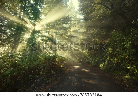 Sun rays on a track road in a golden green autumn forest
