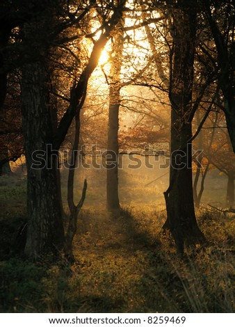 Sun rays on an early morning in an autumn coloured forest - stock photo