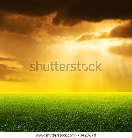 Sun rays over field. - stock photo