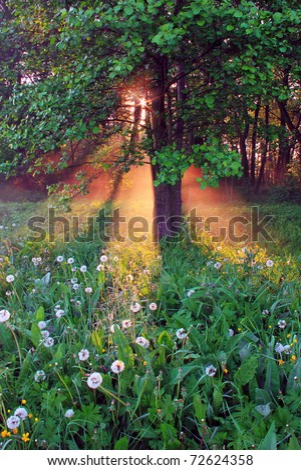 Sun rays pass through the fog on a spring morning - stock photo