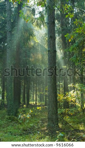 Sun rays shine through branches and trunks