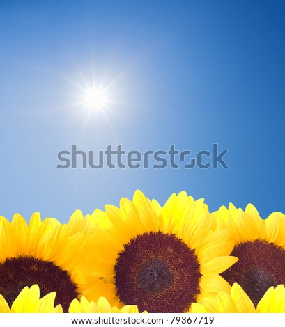 Sun Rays shining down on a row of sunflowers. Plenty of copy space and a very clean sky. - stock photo