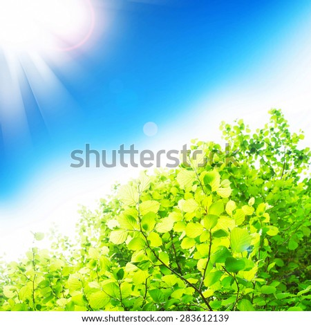Sun Rays Shining over Beech Tree Branches with Fresh Green Leaves - stock photo
