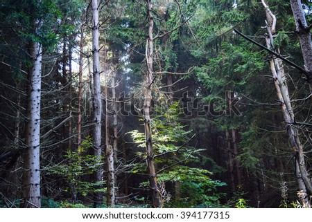 Sun rays shining through the trees during a late summer morning in the forrest. - stock photo