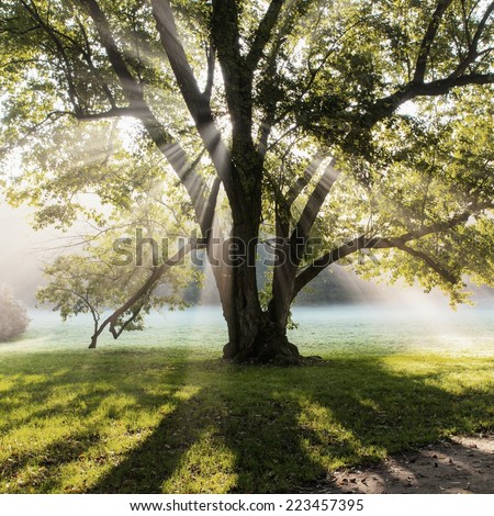Sun rays shining through tree in the park, Czech - stock photo