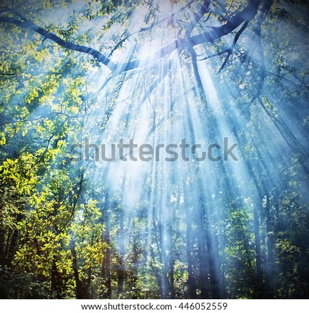 Sun rays shining through trees ,nature background  - stock photo