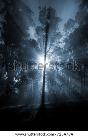 Sun rays through a foggy forest. - stock photo