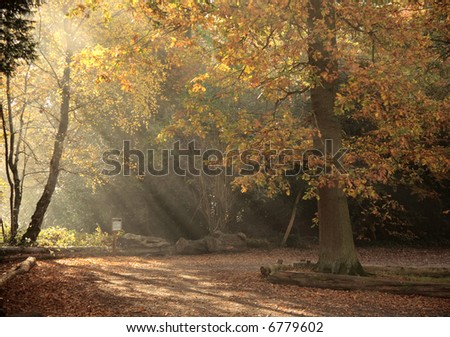 Sun-rays through Autumn trees. - stock photo
