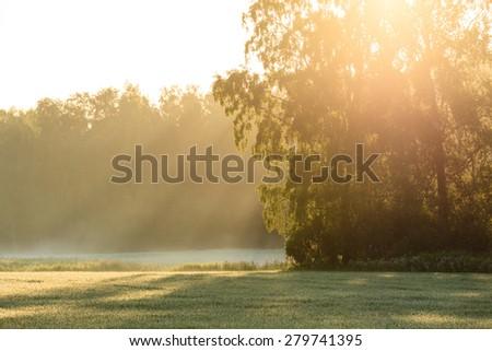Sun rays through foliage in meadow - stock photo