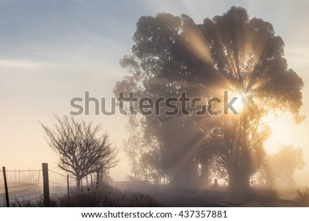 Sun rays through tree on foggy morning by country road. Misty winter morning by a rural road. Sun rays, sun beams shining through a tree. Fog creates a serene, ethereal mood. - stock photo