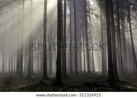 Sun rays through trees in autumn misty forest