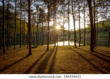 Sun rise at Pang-ung, Pine forest in Thailand. - stock photo