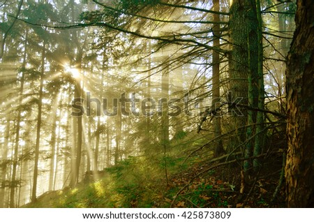 Sun rise in forest - stock photo