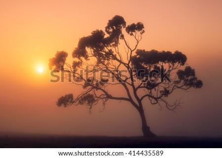 Sun rises over a misty Australian rural scene - stock photo