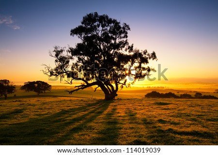 Sun rises over the Clare Valley, South Australia - stock photo