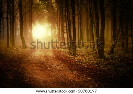 sun rising in a forest with fog - stock photo