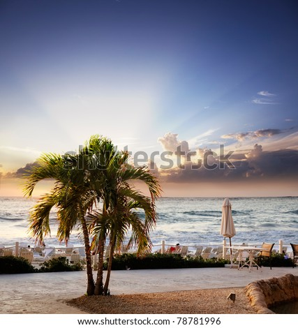 Sun sets behind a resort palm tree on Seven Mile Beach, Grand Cayman - stock photo