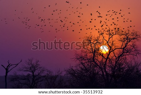 sun setting in kruger national park south africa - stock photo