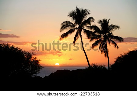 Sun setting into the cloudy horizon silhouetted by palm trees. - stock photo