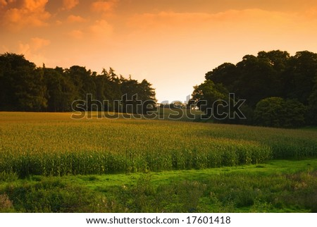 Sun setting over a cornfield, Shropshire, UK - stock photo