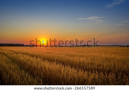 sun setting over the field - stock photo