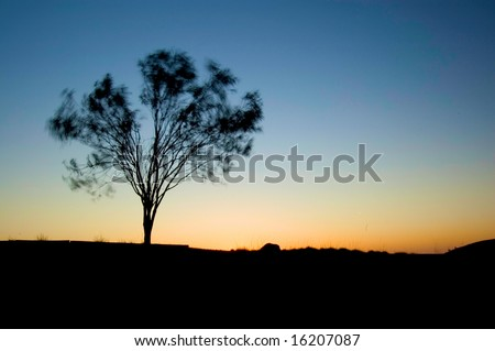sun setting with tree in foreground moving from wind - stock photo