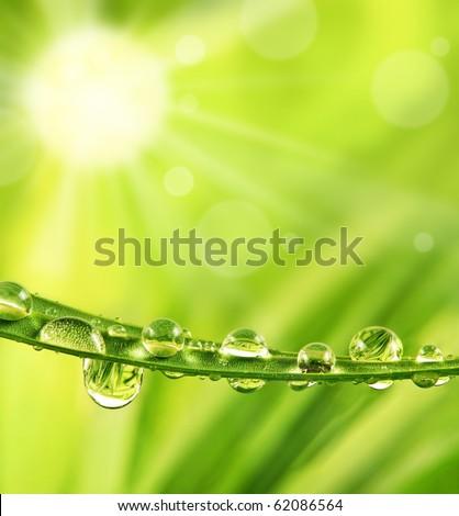 sun shine and rain drops on grass - stock photo