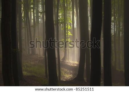 sun shining in a dark forest - stock photo