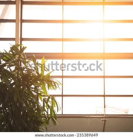 Sun shining through a large plate glass window with a metal frame in a warm glow illuminating a leafy green potted plant, full frame background - stock photo