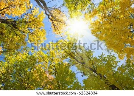 sun shining through autumn treetops - stock photo