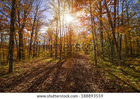 Sun shining through colorful leaves of autumn trees in fall forest and hiking trail at Algonquin Park, Ontario, Canada. - stock photo