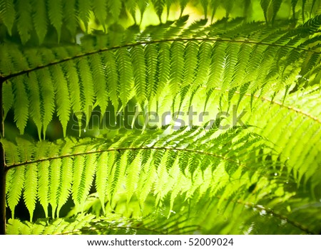 Sun shining through fern leaves in a rainforest in New Zealand - stock photo
