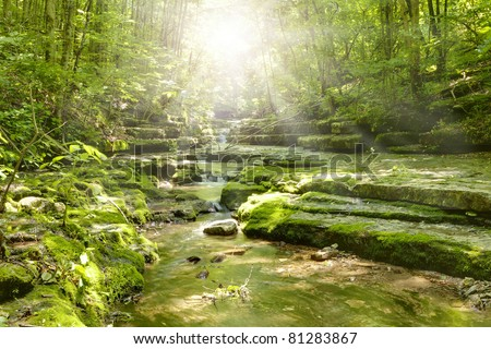 Sun shining through the trees in nature preserve in Central Kentucky - stock photo