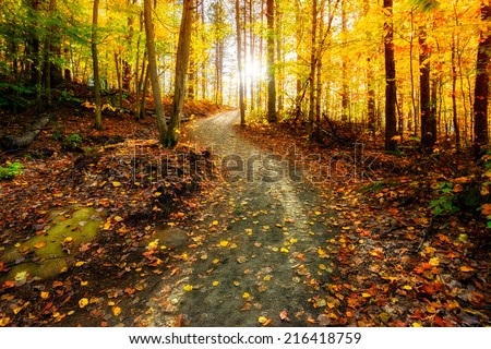 Sun shining through the trees on a path in a golden forest landscape setting during the autumn season.  - stock photo