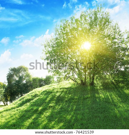 Sun shining through tree. - stock photo