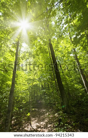 Sun shining through trees on forest path in wilderness - stock photo