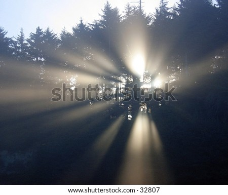Sun streaming through the trees at Prairie Creek State Park, California - stock photo