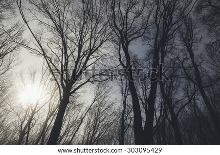 sun through tree branches in forest - stock photo