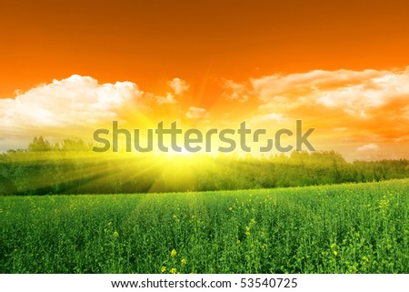 Sun,trees and yellow rapeseed field. - stock photo