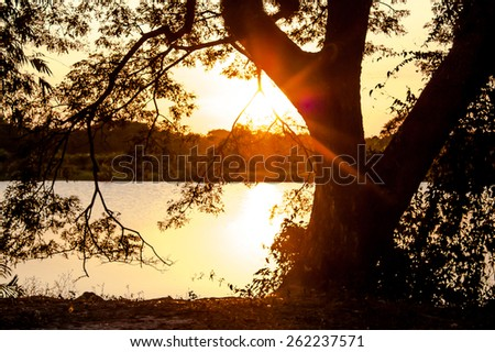 sunbeam and sunset on the river big tree background - stock photo
