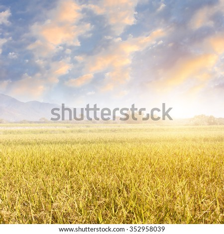 Sunbeam and the golden paddy farm in the rural.