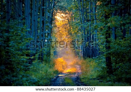 sunbeam in the forest - stock photo