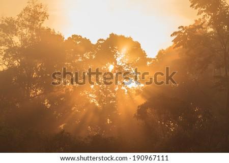 sunbeam shine through green forest - stock photo