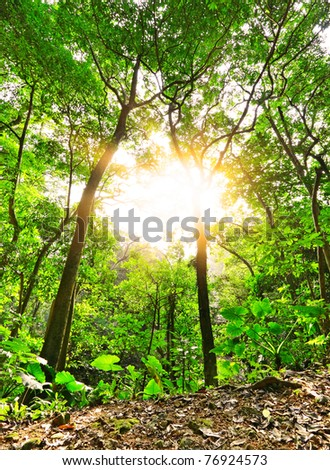 sunbeam shine through green forest - stock photo