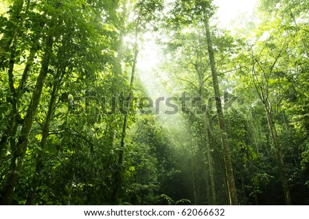 Sunbeam shine thru the tropical green forest - stock photo