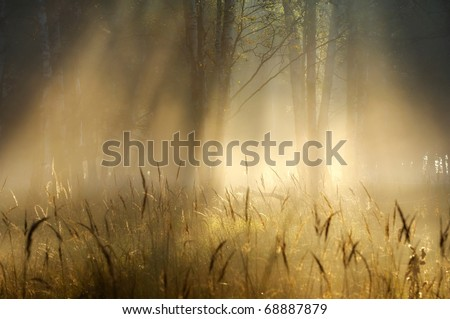 Sunbeams - stock photo