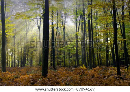 sunbeams and autumnal colors in the forest