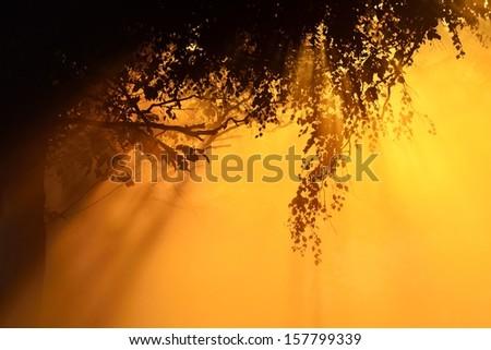 Sunbeams breaking through morning fog and tree - stock photo