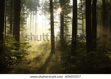 Sunbeams entering into the deciduous forest on a misty summer morning. - stock photo