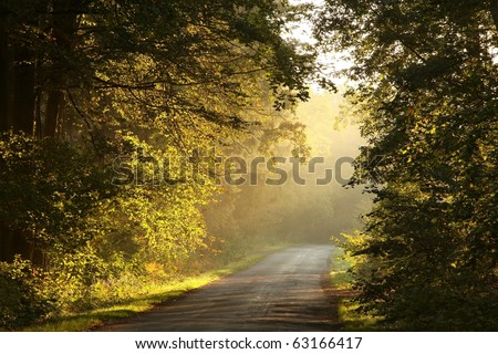 Sunbeams falls on the lane in an enchanted forest on a foggy autumn morning. - stock photo